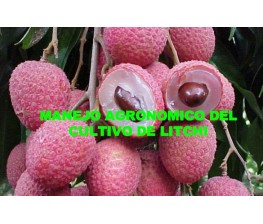 Cultivation of litchi