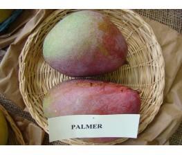 Palmer manga