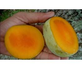 Mangifera Odorata-Kuini