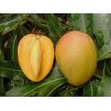 Mango Glenn