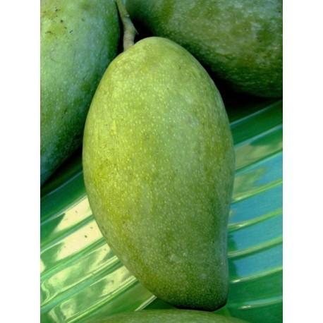 Mango Langra