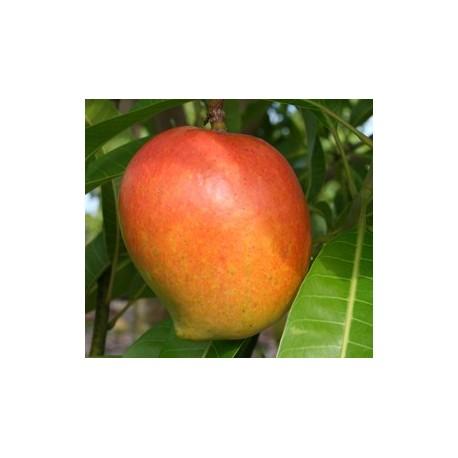 Mango Pairi
