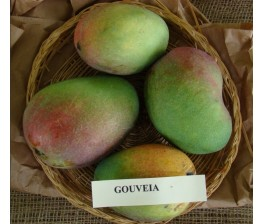 Mango Gouveia