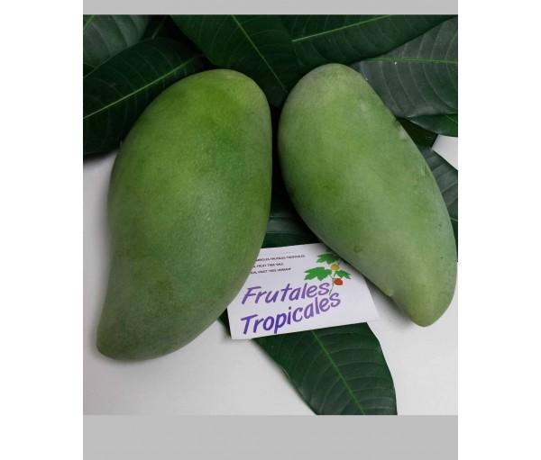 Mango Okrong Wwwfrutalestropicalescom