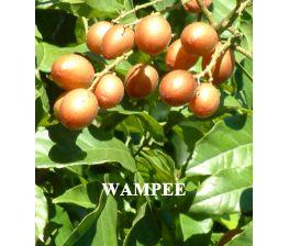 Wampee , Wampi , Clausena lansium