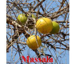 Massala , Strychnos spinosa