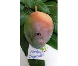 Mango Isis