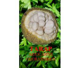 Artocarpus Odoratissimus , Tarap o Marang