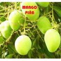 Mango Pineapple Pleasure, mango pina