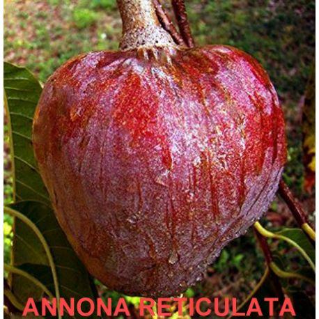 Annona reticulata ,corazón de buey
