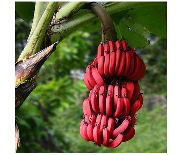 Frutas tropicales  wwwFrutalestropicalescom