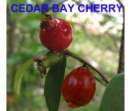 Eugenia reinwardtiana, cedar bay cherry