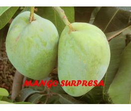 Mango Surpresa