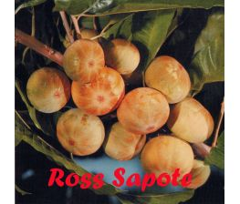Ross Sapote