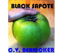 Sapote negro c.v. Bernicker