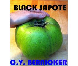 Sapote Noire c.v. Bernicker