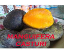 Manguifera Casturi, Kasturi, Kalimantan
