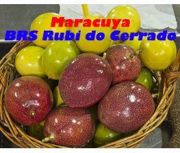 Maracuya BRS Rubi do Cerrado