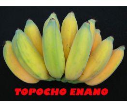 Banana anão Topocho