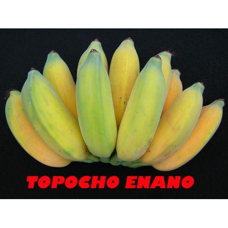 Platano Topocho enano