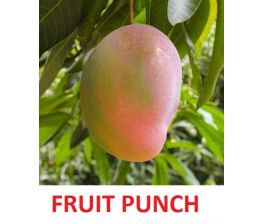Mangoe Fruit Punch