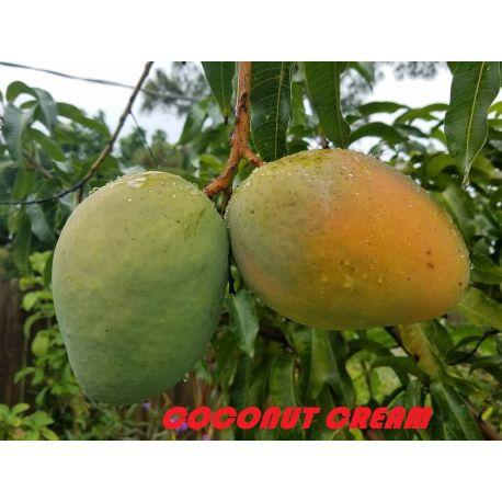 Mango Coconut cream