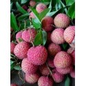 Litchi Kwai May Pink