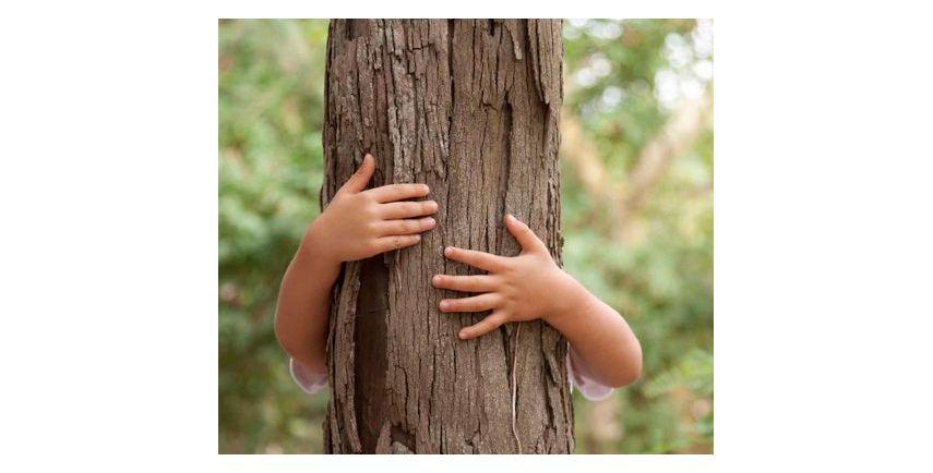 BENEFICIAL OR MEDICINAL TREES
